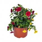 Trixi – mix balkónových květin